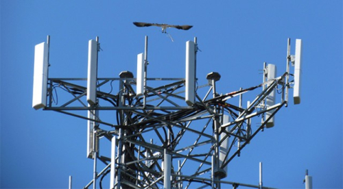Osprey-cell-tower-640x353